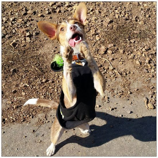 Cooperhound got Derp