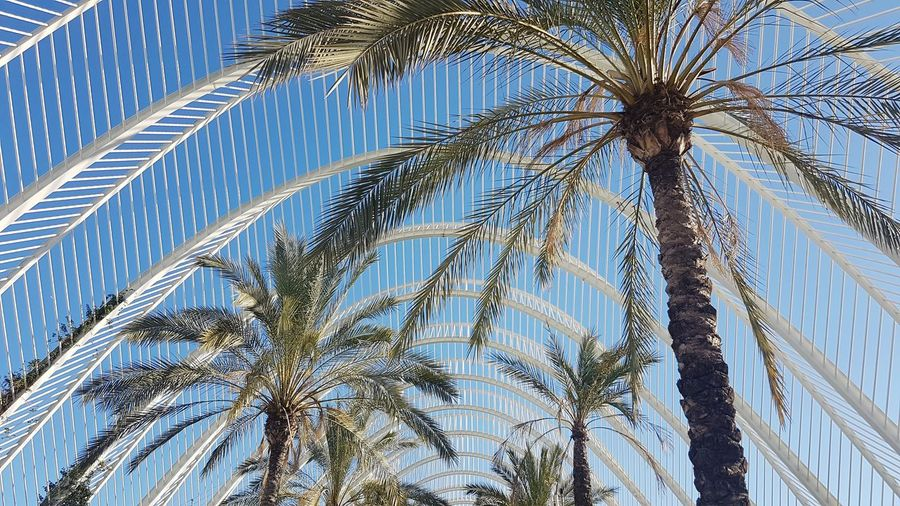 Architecture And Nature Palm Tree Low Angle View Tree Sky No People Outdoors Growth Day Nature