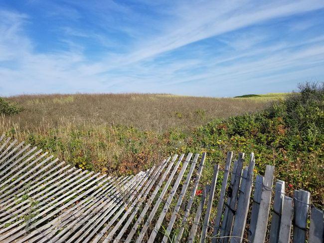 Beach Fence Quiet Places Fence Cape Cod Blue Sky Dunes Beach Plum Field Sky Landscape