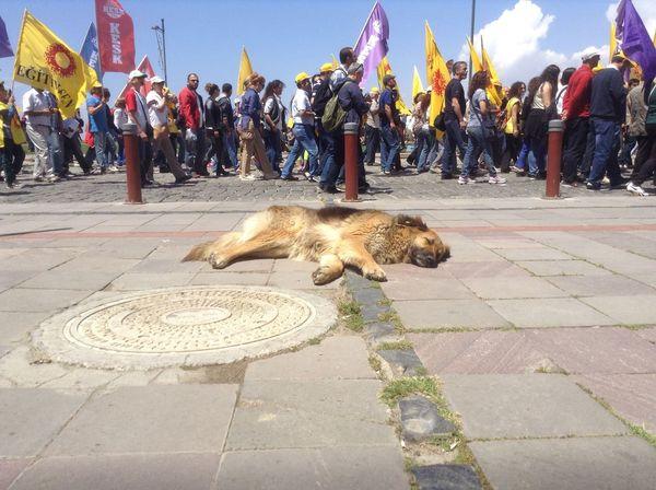 People Watching 1mayis 1mayıs Kordon Turkey Izmir Kesk Disk Eğitimsen