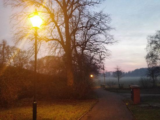 Tree Sunlight Outdoors Sky Grass Dusk Sunset Park Streetlamp Mist Fog