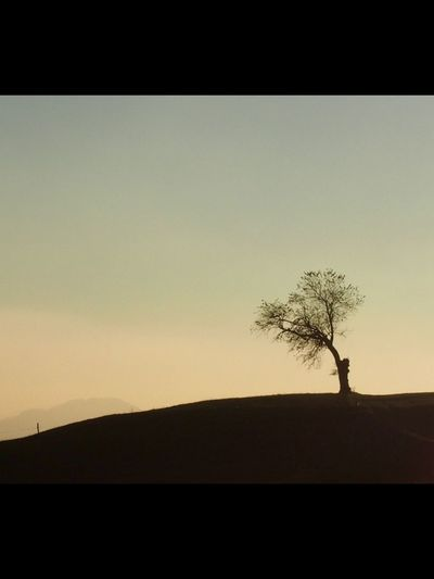 Tree Tranquility Beauty In Nature Clear Sky Outdoors Landscape Silhouette Single Tree Tranquil Scene