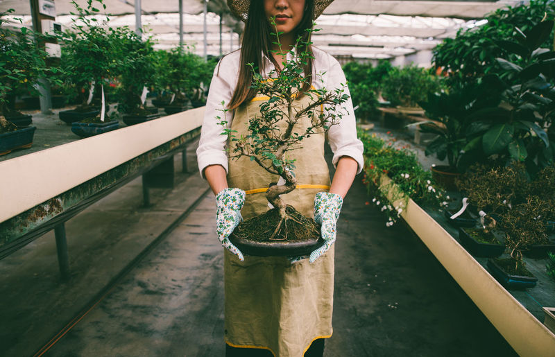 Midsection of woman holding bonsai tree while standing in greenhouse