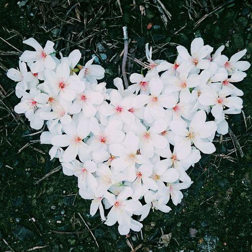 油桐花,又排成愛心了。 Flowers Beautiful May Snow 油桐花