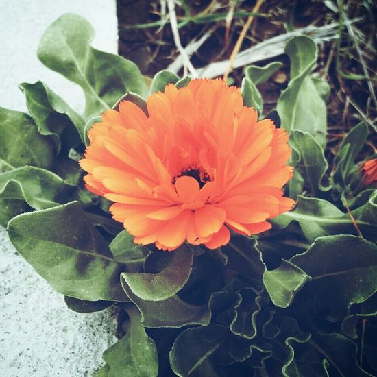 Anastasiaspecial Instagram Flower Flowers Green Orange First Eyeem Photo