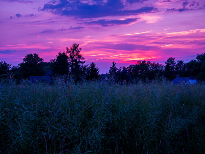 Blue Hour EyeEm Best Shots EyeEm Nature Lover EyeEm Gallery EyeEmNewHere Panasonic  Agriculture Beauty In Nature Cloud - Sky Clouds Field Follow4follow Germany Growth Landscape Nature Plant Romantic Sky Saxony Sky Sunset Tranquil Scene Tranquility Tree Violet