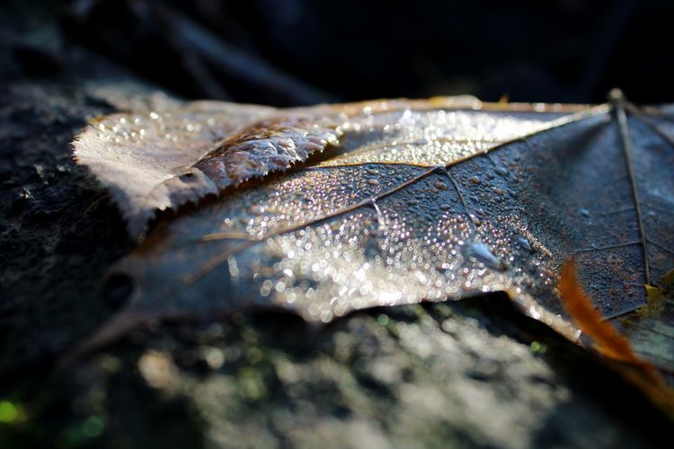 Close-up of dried leaf on wet autumn leaves