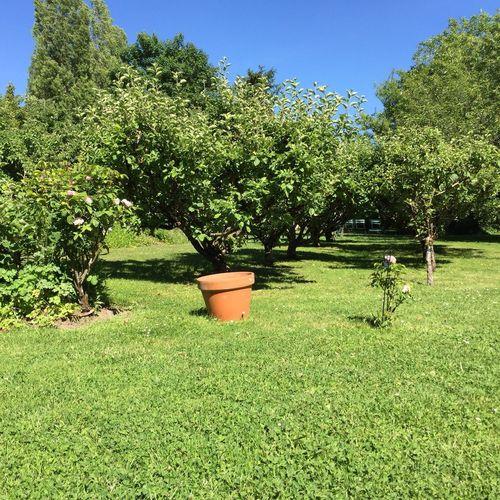 Jardin du musée Mallarmé, arbres fruitiers, pommes, pommiers,