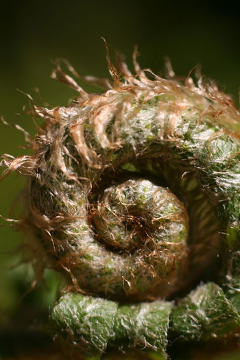 Nature No People Close-up Outdoors Beauty In Nature Day Fragility Animal Themes Fiddleheads Fiddlehead Fern