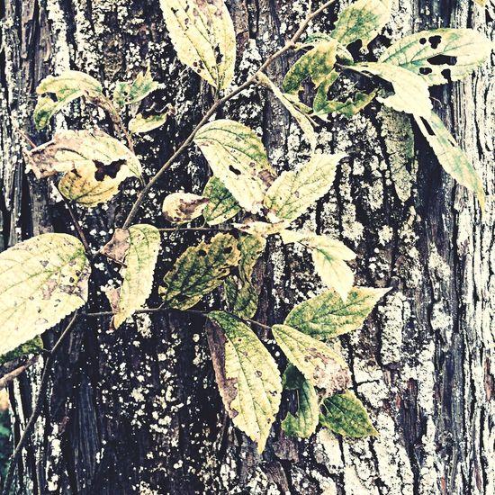 Autumn Take Photos