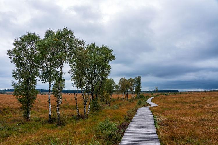 Footpath amidst trees on field against sky