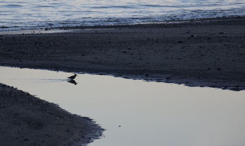 Tide Receeding Wader Water Bird Bird Standing In Water Dunlin Alone Reflection Sea Outgoing Tide Dusk Sea Bird