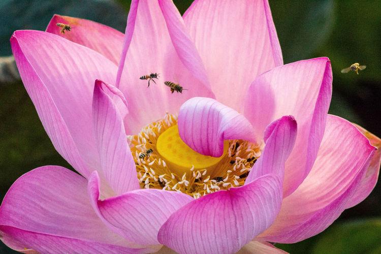 Detail of pink flower