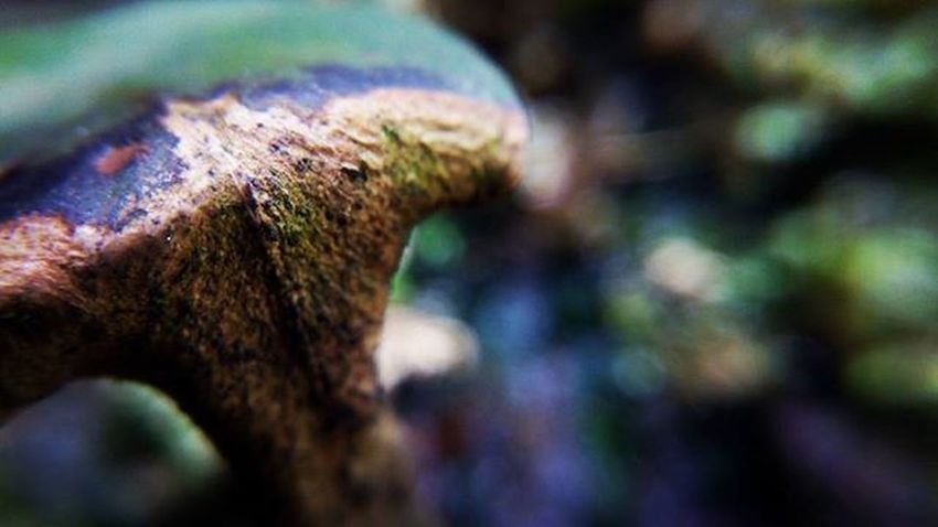 Nature Cry. Lens : Macro Gear : Lenovo A859 Lenovotography Lenovomobilegraphy Smartphonephotography Fotografiponsel Macro Macrolens Widelens Smartphonewidelens Lenovo LenovoA859 Phonecam Mobilephonecamera Mobilephonecam