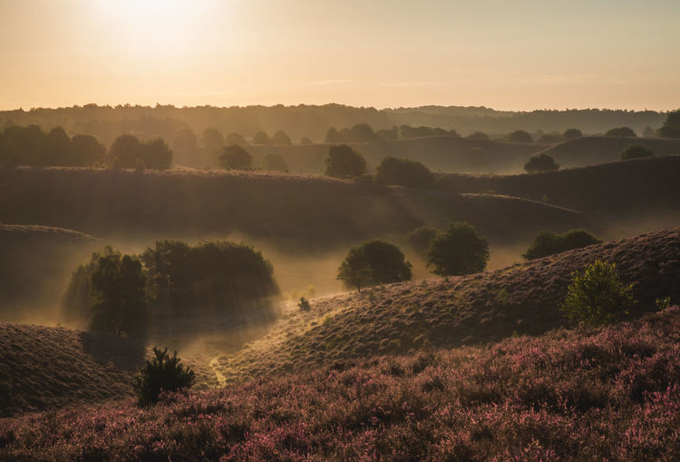 Sunrise at the Posbank, National Park Veluwezoom in The Netherlands. Heath Hills National Park Nature Netherlands Path Posbank Trees Veluwe Blooming Blooming Flower Blossom Fog Fuji Fujifilm Heather Heatherfield Landscape Mist Moorland Moorland Wilderness No People Sky Sunrise Veluwezoom