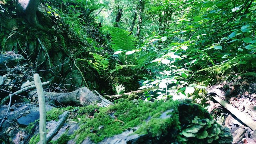 Woodland Tree Forest Nature Scenics Beauty In Nature EyeEm Best Shots Outdoors WoodLand Tree Trunk Ireland 🍀 Remote Calm Nature Photography Green Woodlands The Color Of School Lonelyplanet Traveller Greeneryeverywhere Forestphotography Growth Environment Tranquility Tranquil Scene