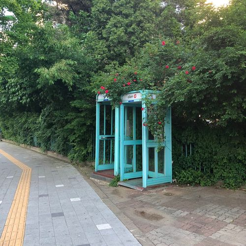 Phonebooth Plant Tree Green Color Growth Day Nature No People Road Architecture Outdoors Transportation Built Structure Sunlight Sign Communication Park Footpath Park - Man Made Space City Building Exterior
