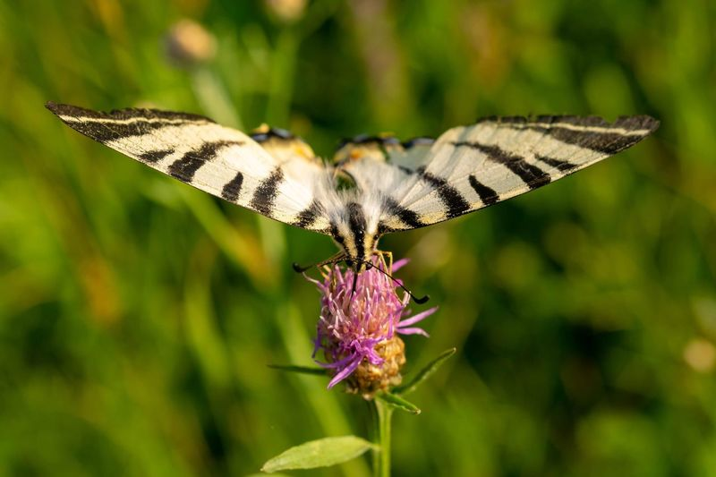 Landing spot. EyeEmNewHere Nature Photography Nature Wildflower Animals In The Wild Spread Wings Flower Perching Full Length Butterfly - Insect Insect Awe Animal Wing Butterfly Animal Antenna Animal Markings Pollination Flower Head Symbiotic Relationship