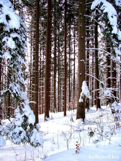 Trees Slovakia Hellowerkey 🌲