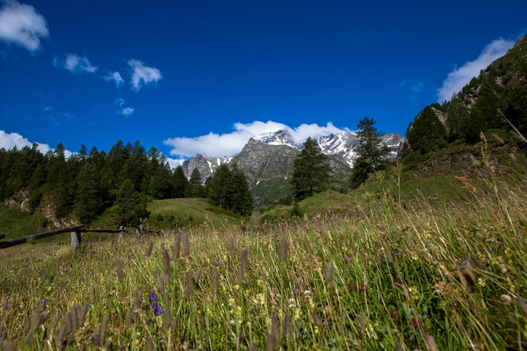 Plants on field by mountains against blue sky