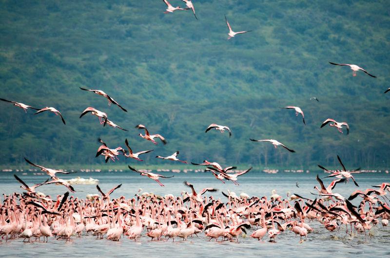 View of flamingo at lakeshore