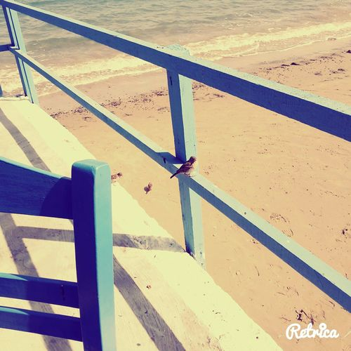 Taking Photos Enjoying The Sun Messinia Blue Birb Methoni