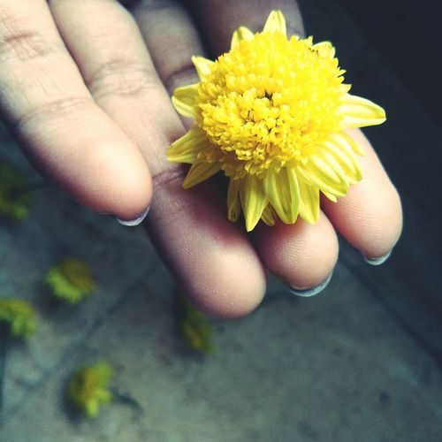 Flower Human Hand Yellow Freshness Fragility Close-up Petal Lifestyles Nature Flower Head One Woman Only Holding Beauty In Nature EyeEmNewHere Hand Finger Print Fingers Detail EyeEmFlower Eyeemhand Flowers, Nature And Beauty Flower Photography Hand