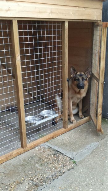 Hes not very happy because its been raining all day Domestic Animals Animal Themes One Animal One Dog German Shepherd Pets Dog Outdoors No People Kennel Kennel Dog Not Happy Building Exterior Looking At Camera Big Dog Large Dog Soppy Animal Alert Dog Alert Wooden Structure The EyeEm Collection