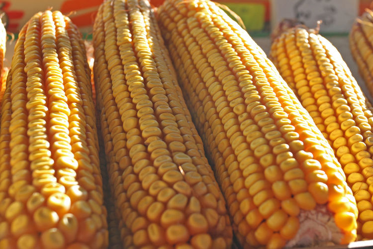 Cereal Cobs Corns Popcorn Raw Seeds Background Close-up Corn Corn On The Cob Day Food Food And Drink Freshness Grains Healthy Eating Maize Market No People Nutrition Pattern Sweetcorn Texture Vegetable Yellow