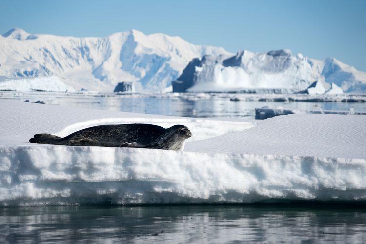 Seal on glacier against sky