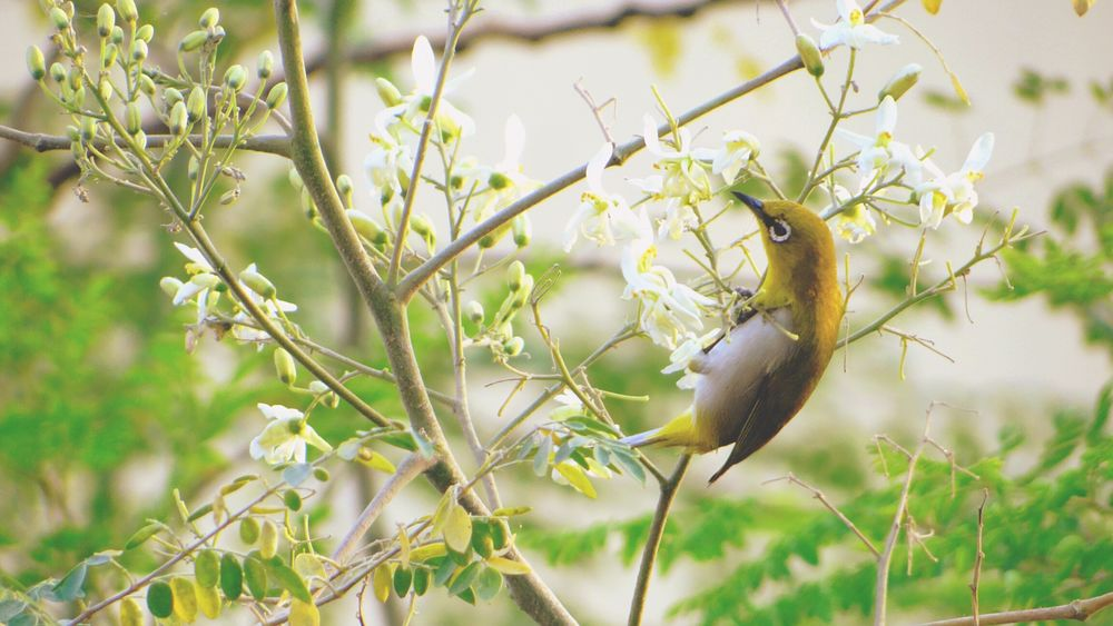 Hummingbird Humming Birds Beautiful Birds Birds🐦⛅ Hummingbirds Flowers Beautiful Nature Beauty In Nature Bird On A Tree Bird On A Branch Nature Photography My Perspective From My Point Of View Hello World Check This Out EyeEm Masterclass EyeEm Best Shots Taking Photos EyeEm Gallery India ASIA The Great Outdoors - 2016 EyeEm Awards