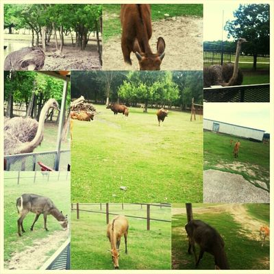 My Safari Trip !