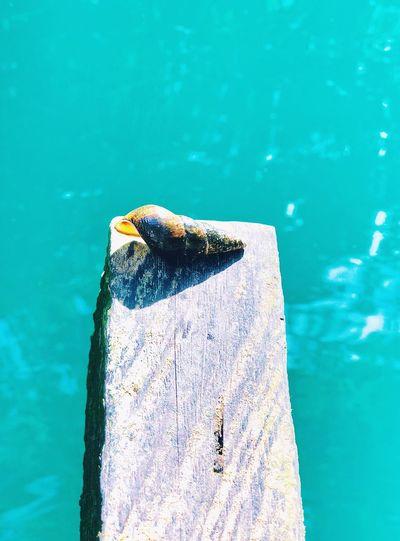 High angle view of animal shell over sea on plank