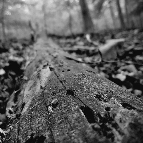 Textured  Selective Focus Outdoors Nature