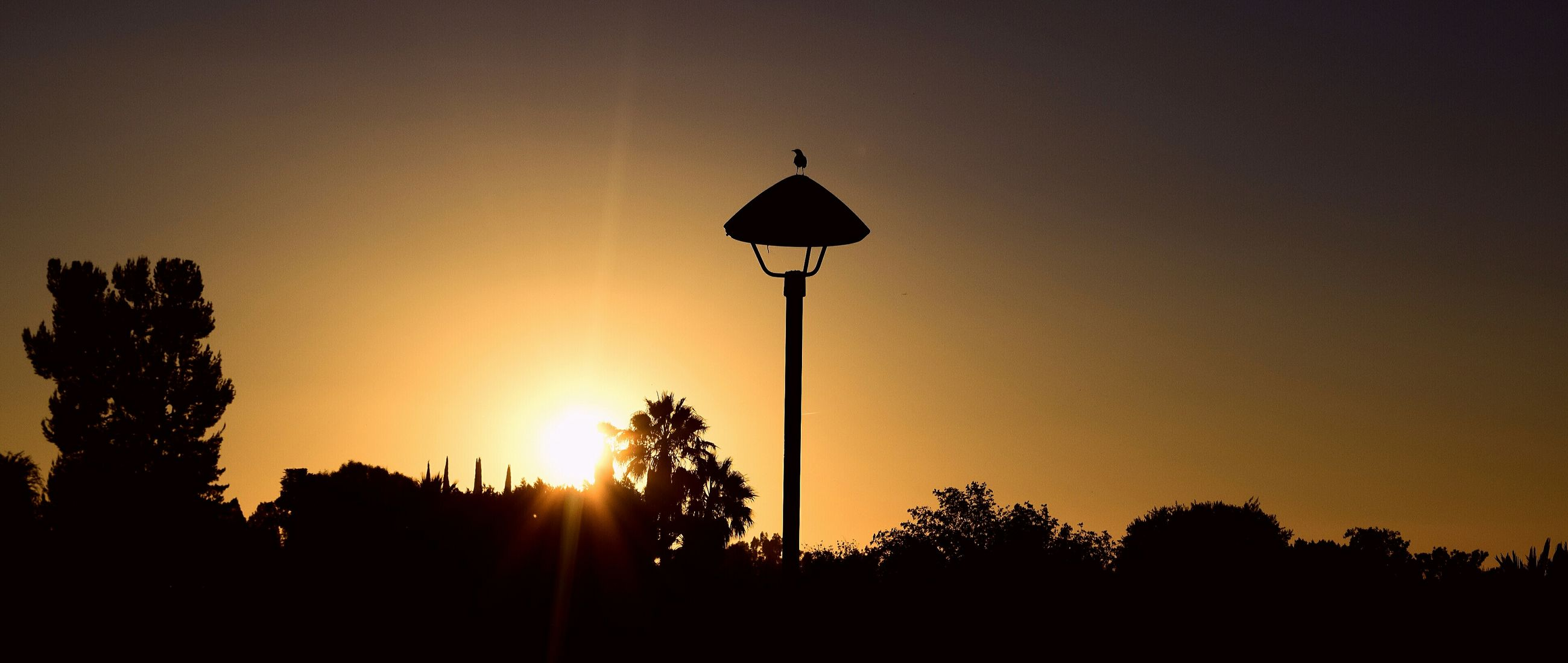 silhouette, street light, sunset, tree, low angle view, sun, sky, lighting equipment, clear sky, nature, tranquility, beauty in nature, copy space, outline, sunlight, growth, outdoors, no people, lamp post, tranquil scene