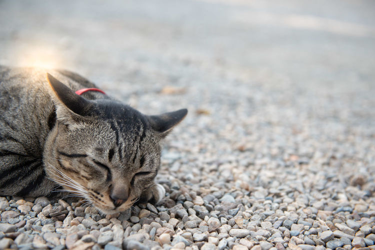 Close-up of a cat resting on pebbles
