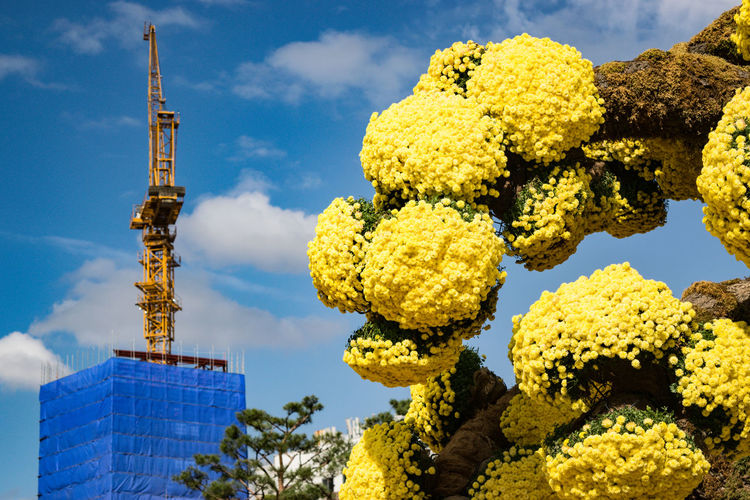 Low angle view of flowering plants by building against sky