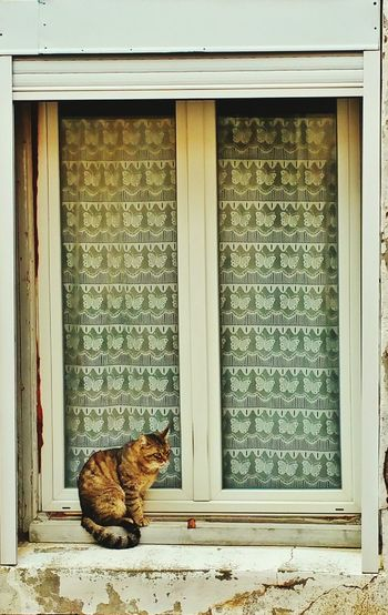 Window Domestic Cat Outdoors Domestic Animals No People