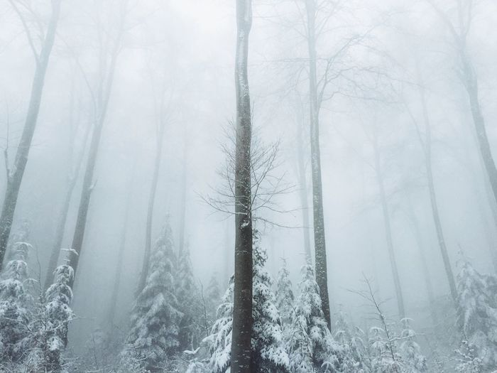 Low Angle View Of Trees Covered With Snow In Forest