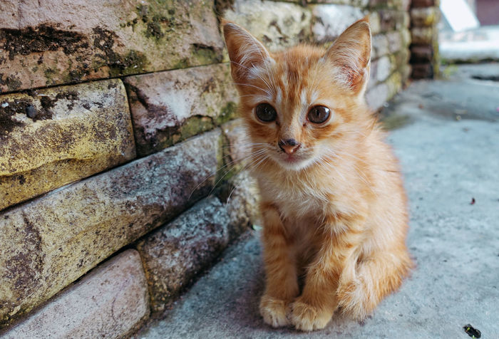 Adorable kitten in the worldwide One Animal Domestic Animals Mammal Pets Domestic Cat Cat Feline Portrait Vertebrate Looking At Camera No People Day Focus On Foreground Sitting Whisker Close-up Ginger Cat Animal Eye Petal Kitten Cute Kitten Homeless Cats Little Kitty Adorable Cat  Lovely Cats