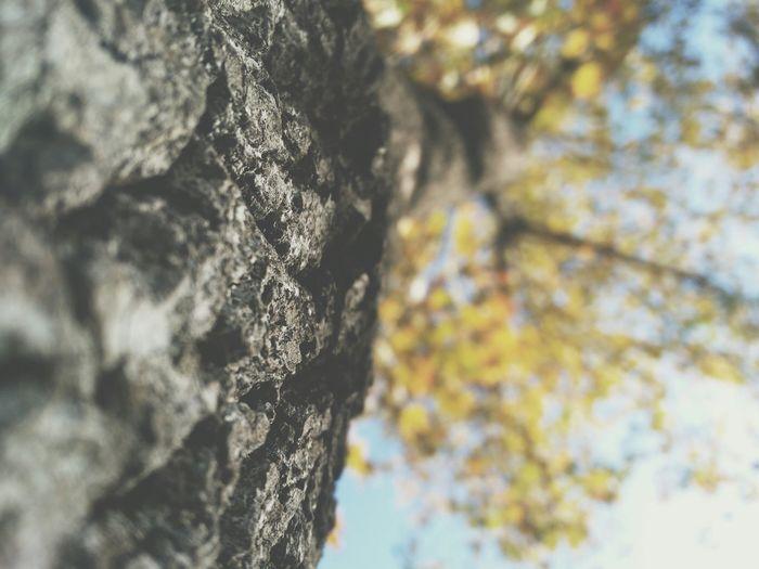 Vscocam Taking Photos Streetphotography Mobilephotography Tree Tree And Sky Vscoturkey Leaf 🍂 Low Sharpness