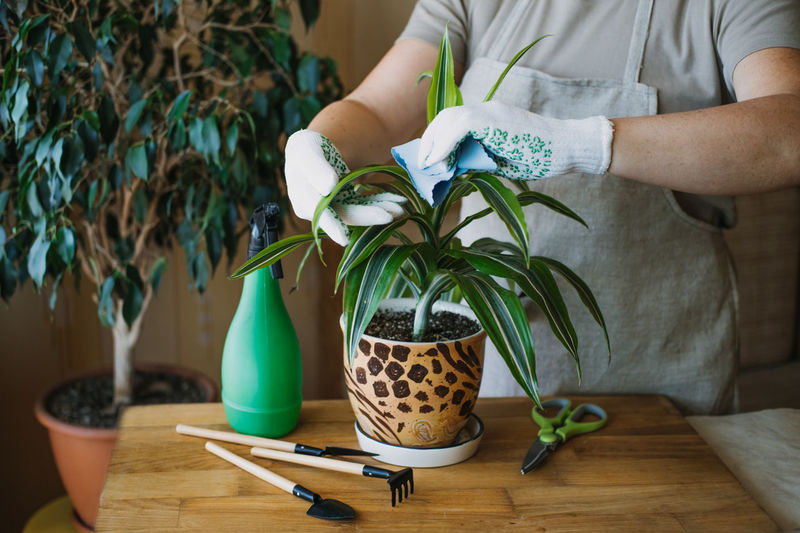Midsection of woman holding potted plant on table