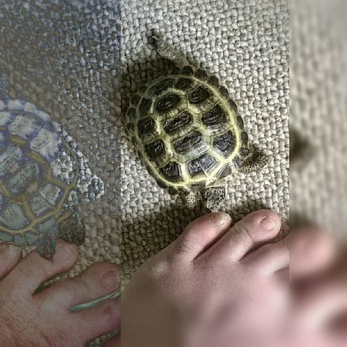 good morning Human Body Part Monday Morning Mondaymorning Animal Themes Turtle Love Animals For My Friends That Connect Turtle 🐢 Tortoise Indoors