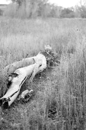 Horse lying on field