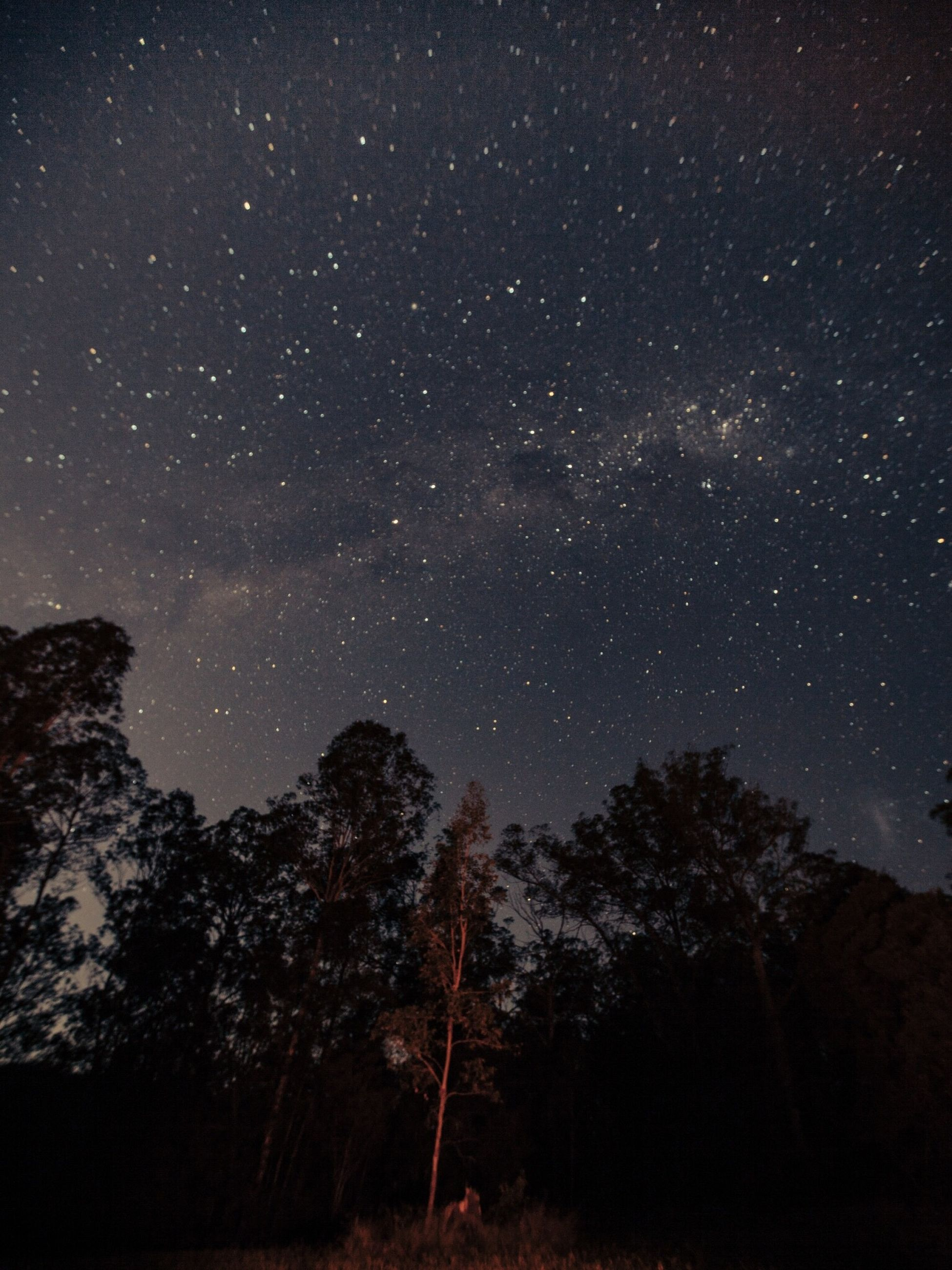 night, star - space, sky, space, tree, astronomy, beauty in nature, plant, scenics - nature, tranquility, nature, star, low angle view, tranquil scene, galaxy, no people, star field, infinity, idyllic, outdoors, milky way