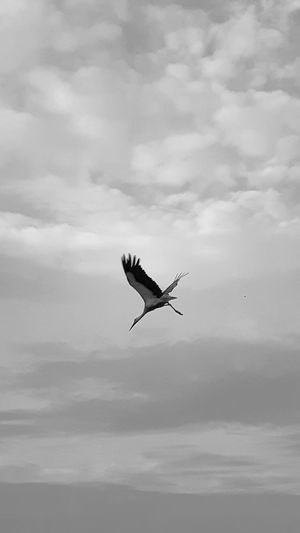 Low angle view of bird flying against clouds