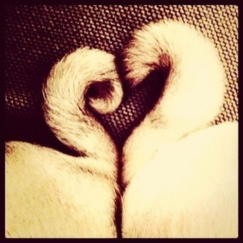 Ilovepugs Pug Love Pug Life ❤ Pug