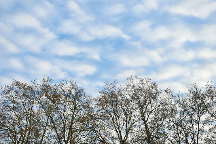 Sky Cloud - Sky Nature Day Outdoors No People London Trees Clouds Copy Space Blue Color Blue Sky Nature