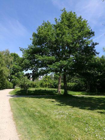 Lübeck Drägerpark Tree Sky Grass Green Color