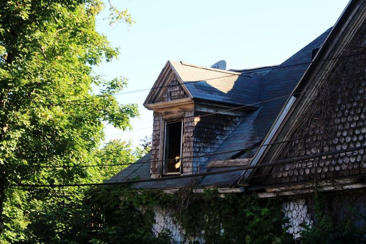 Tree Roof House